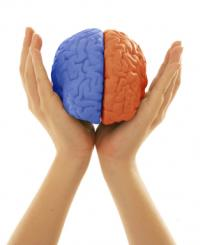 two hands holding a brain with left side blue and right side red like a split brain in negotiations