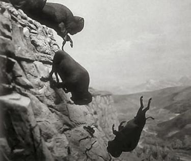 Buffalo jumping off cliff like negotiator without a BATNA